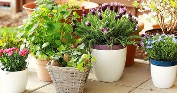 Bien Magazine - If you have the tendency to forget about your home garden, you have to get plants for the busy